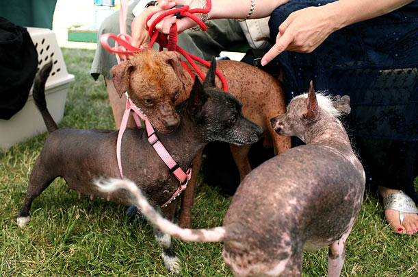 The contest attracts canines from all over the country. This year's show featured 15 participants.