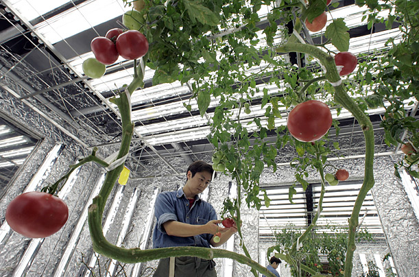 Urban Farming Around the World