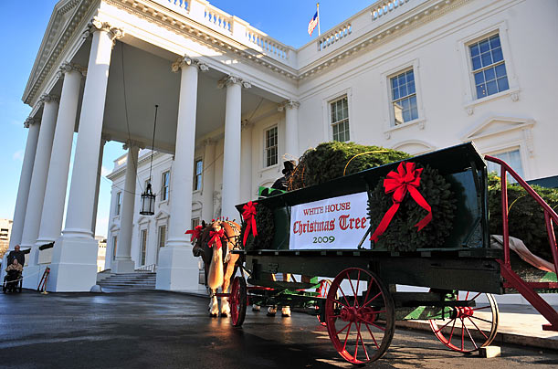 The Tree Arrives