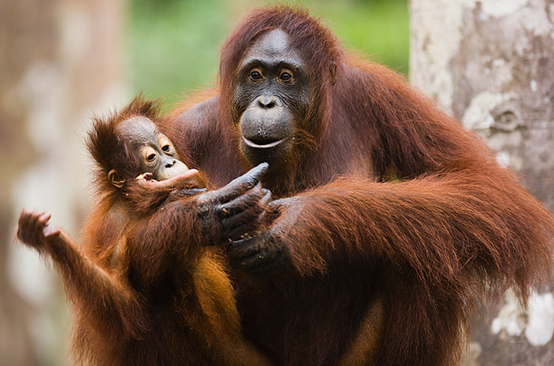 Amazing Moms of the Animal Kingdom