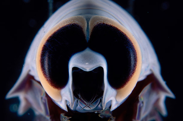 Australia's Deep-Sea Creatures