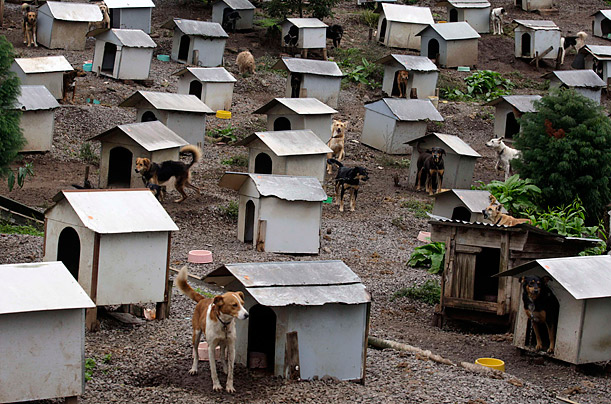 Doggy Favela