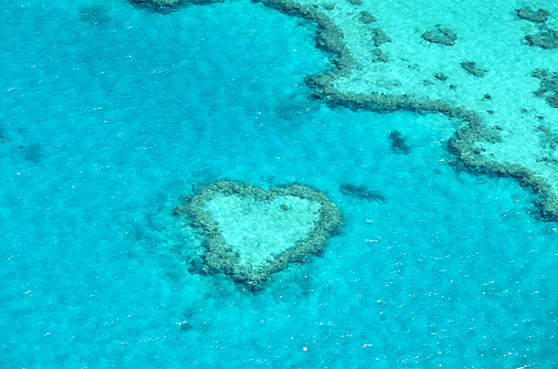 Coral Heart, Hardy Reef, Queensland, Australia
