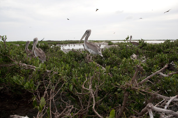 Thousands of Birds Die on Raccoon Island