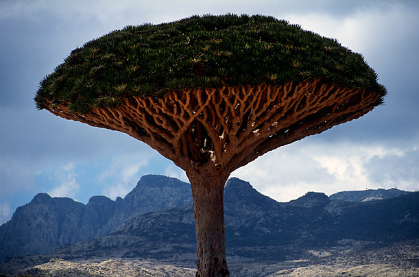 The Beauty of the Island of Socotra