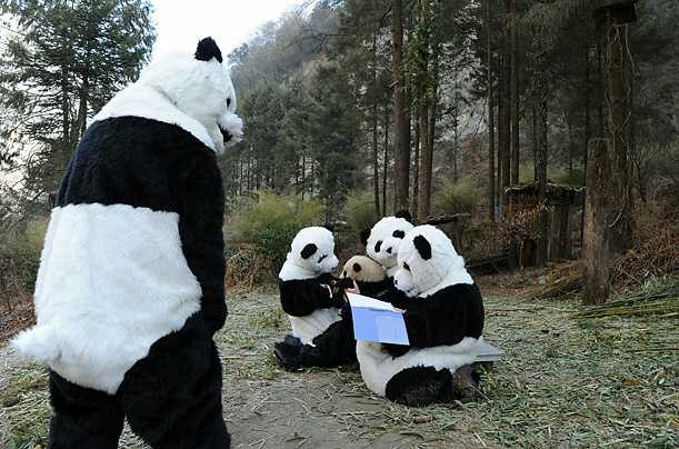 Weird Science: Giant Panda Conservation <br />Researchers dress in panda costumes at China's Wolong National Nature Reserve to help re-introduce the pandas to the wild and eliminate human influence from their environment