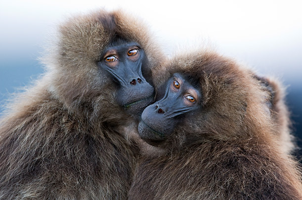 The World's Most Elusive Primates