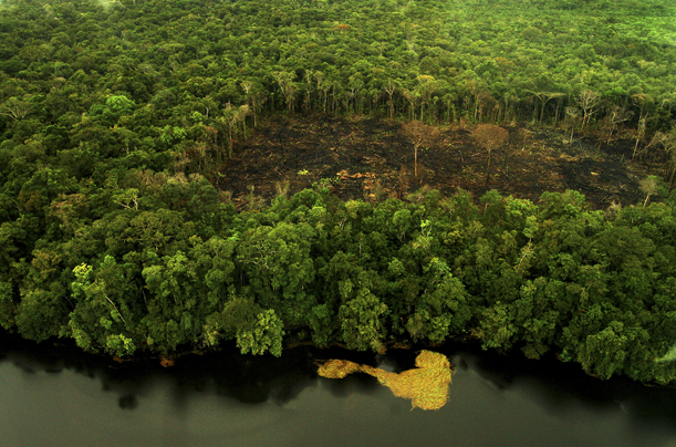essay on Deforestation Issues in Brazil