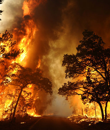 A wildfire burns out of control in Bastrop State Park near Bastrop, Texas, USA, 05 September 2011.