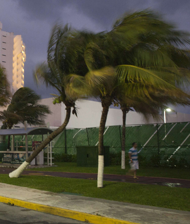 A tourist walks past palm trees swaying in winds caused by the proximity of the Rina hurricane off the coast of Quintana Roo in Cancun's hotel zone October 25, 2011
