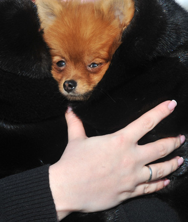 A woman carries a small dog under her fur coat during heavy frost in Kiev on February 2, 2012