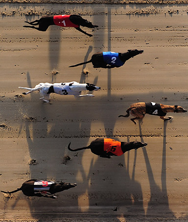 A general view of dogs running at Romford Greyhound Stadium on March 24, 2011 in Romford, England.