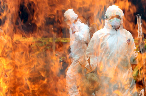 Officers from the Indonesian Ministry of Health wear protective suits as they slaughter chickens during a joint bird flu prevention drill in Jakarta.