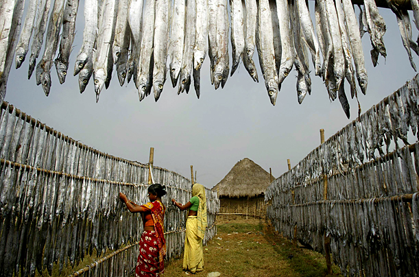Women put fish out to dry in village in India.