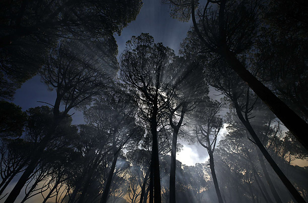 Trees are shrouded in smoke during a blaze on the slopes of Cape Town's Table Mountain in South Africa.