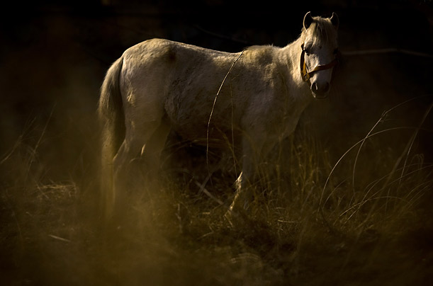 A Caspian miniature horse is seen at a garden near Tehran, Iran.