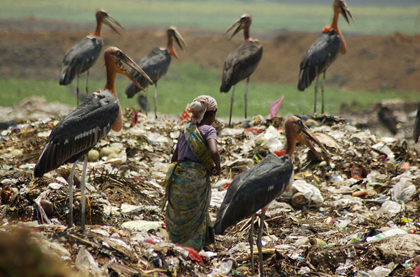 A scavenger, surrounded by a flock of birds, collects plastic for recycling at a dump in Guwahati, India.