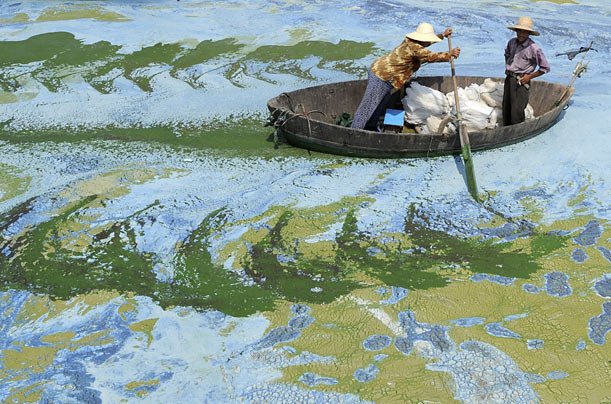 Fishermen row a boat in the algae-filled Chaohu Lake in Hefei, China.