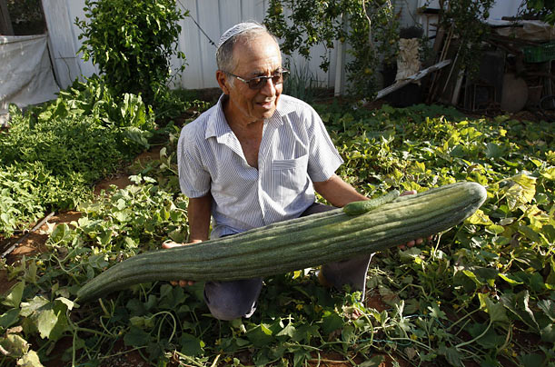 Israeli Yitzhak Yazdantana poses with a cucumber he grew in his garden near Tel Aviv that he hopes will be recognized