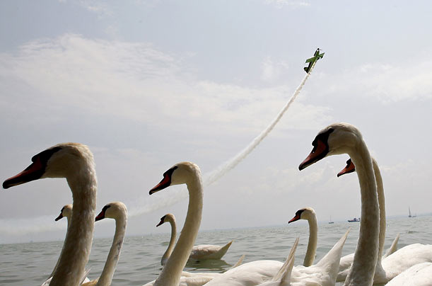 Pilot Zoltan Veres flies near a flock of swans at Lake Balaton during the Grand Aero Challenge in Balatonfured, Hungary.