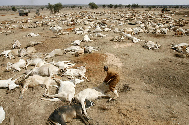 Farmers in drought-stricken Kenya are cutting their losses by selling their dying livestock for meat at places like the Kenya Meat