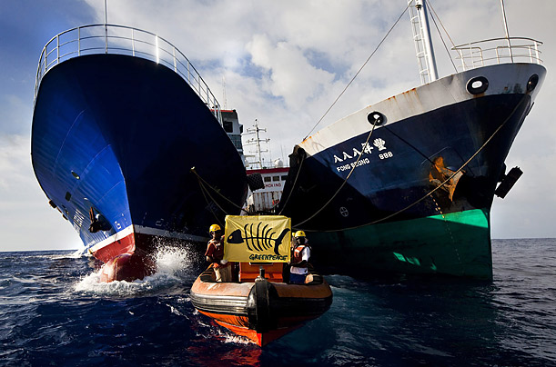 Greenpeace activists fly a banner depicting a skeleton of a tuna between the hulls of US-flagged American Legacy fishing vessel and Panamian-flagged MV Fong Seong 888, in the Pacific Ocean.