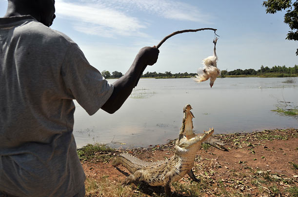 A guide lures a crocodile with a chicken for the amusement of tourists near Ouagadougou, Burkina Faso.