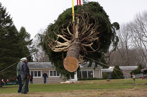 A 76-foot tall Norway spruce tree in Easton, Connecticut, is carefully lifted for transport to New York, where it will be the 2009 Rockefeller Center Christmas Tree.