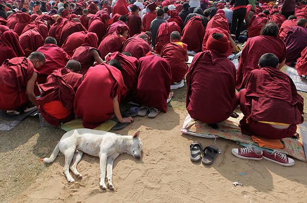 Indian Buddhist monks (and a friend) listen to a lecture given by the Dalai Lama at Mahabodhi temple in Bodh Gaya, India.