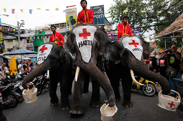 Thai elephants walk through the backpackers' area of Khao San Road to collect money for the survivors of Haiti's earthquake.
