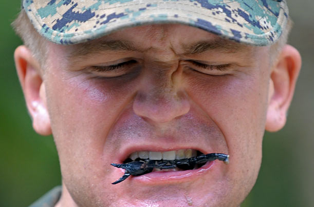 A U.S. Marine eats a scorpion while participating in a jungle survival program during the massive annual combined military exercise Cobra Gold