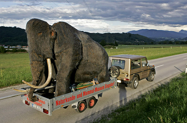 A giant mockup of a mammoth travels past Schweinbach, Germany on its way to the Natural History and Mammoth Museum in Siegdorf.