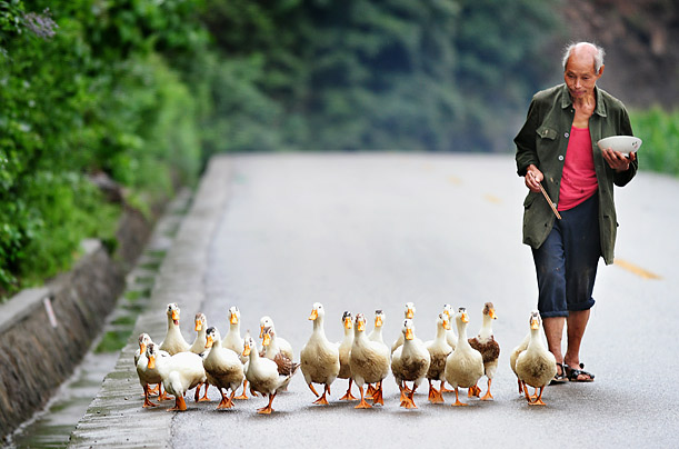 A farmer eats his lunch while following his flock of ducks along a country road in Guangyuan County, China.