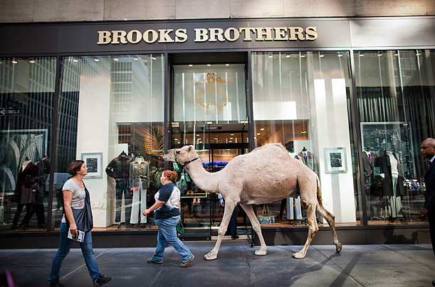 Amanda Brook walks a camel named Ted up sixth Avenue past Brooks Brothers after a photo opportunity in front Radio City Music Hall in New York City.