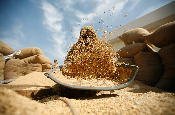 A labourer winnows rice at a market yard in Bavla, India.
