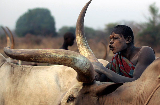 A man from the cattle herding Mundari tribe cleans a cow with ash in a settlement near Central Equatoria state in South Sudan.
