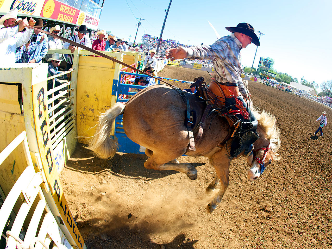 1000 Images About Bronc Riders No How To Set A Horse On
