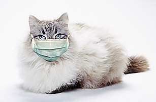 cat gets swine flu the top 10 everything of 2009 time