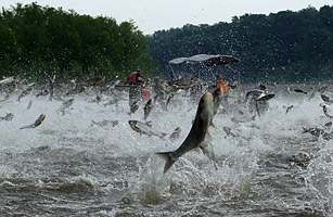 Think, asian carp lawsuit date filed join. agree