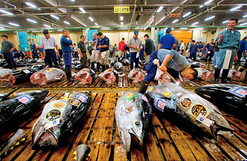 Tuna The Hidden Cost Of The World S Priciest Fish Time