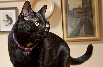 Kitty Prozac: Can Synthetic Pheromones Calm Your Pet? - TIME