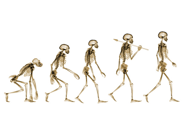 Evolution of Man Theory