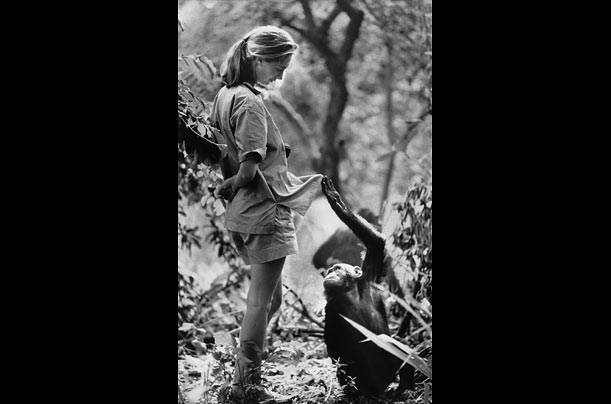 The magnificent mary leakey essay