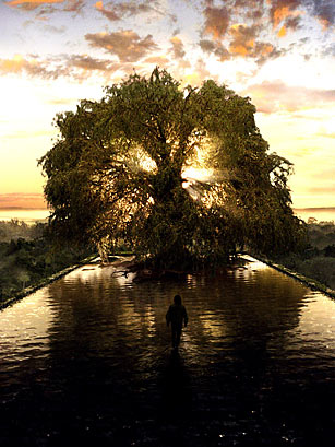 The Tree Of Life Happy Arbor Day Top 10 Awesome Trees