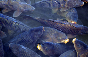 Absolutely agree asian carp lawsuit date filed
